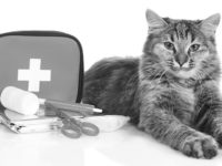 Disaster Prep for Pets Can Bring Piece of Mind